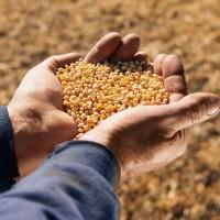 Купуємо СОЮ без ГМО