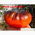 Продам семена томатов
