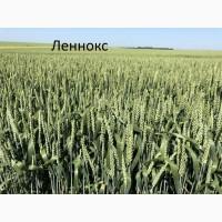 Канадская пшеница Ленокс 1реп. (двуручка)