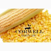 Куплю кукурузу, пшеницу и ячмень