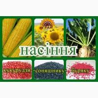 Продаємо насіння соняшнику Солтан SU