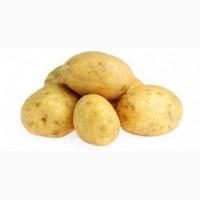 Картофель разных сортов продадим оптом
