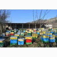 Продам бджолопакети української степової породи в кількості 100 шт рамка дадан