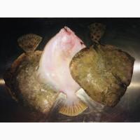 Рыба Калкан ОПТ/мелкий опт Свежемороженый Азовский Крупный
