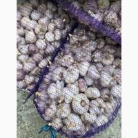 Чеснок от Агропапы. Воздушка, однозубка, Сорт - Любаша. Повышение цен с 14 сентября
