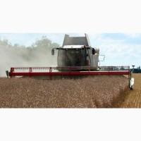 Закупаем пшеницу - зерновые культуры