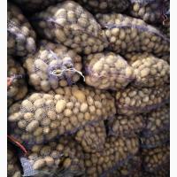 Куплю молодой картофель по 3 грн с доставкой в Киев