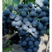 В наличии виноград на опт