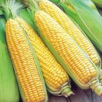 Куплю зерно Кукурузы