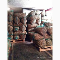 Продам горіхи