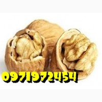 Закупаем орех кругляк бойный