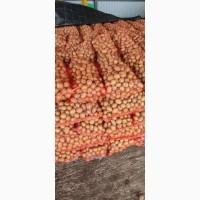 Продаємо картоплю сорту Гала