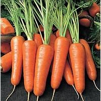 Семена моркови Яскрава