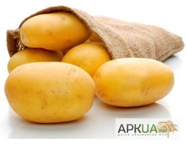 колете семена картофеля