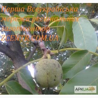 Куплю грецький горіх Дорого, по всій Україні