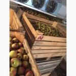 Компания закупает яблоко на переработку