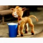 Сухое молоко Лактофит-ТП Экстра для телят, поросят