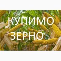 Закуповуємо по Західним областям кукурудзу від 25 тонн
