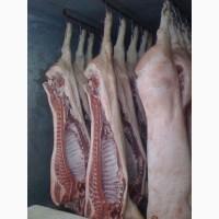 Продам свинину в полутушах