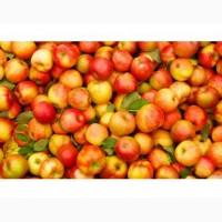 Яблоки флорина джонаголд