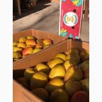 Продам грушу Яблунивська