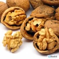 Грецкий орех ОПТ и розница