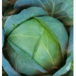 Семена Капуста белокочанная поздняя Бирюза