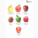 Продам яблоки (на урожай 2017г)