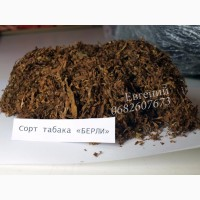 Табак «Берли» лапшой средней крепости. Урожай 2017 года