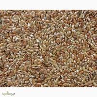 Продам семена Льна коричневого, Одесская обл, Матроска