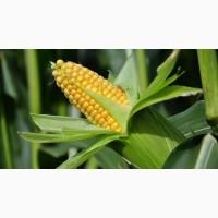 Продам жмых кукурузы (зародыша)