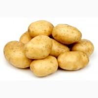 Продажа оптом в больших количествах картофеля
