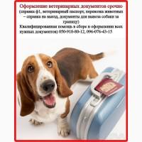 Оформление ветеринарных и разрешительных документов для вашего любимца, Харьков
