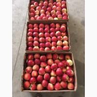 Продаем оптом товарное яблоко