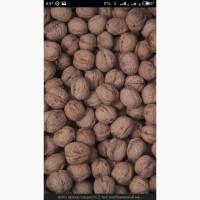 Купим грецкий орех в скарлупе 16гр.без черного и прошлогоднего