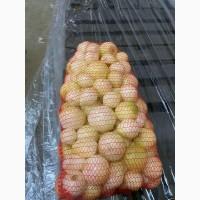 Продам лук очищенный от производителя