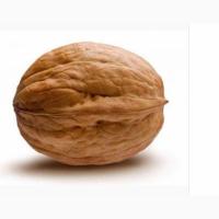 Продам греческие орехи (этого года)