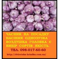 Пропонуємо насіння озимого часнику (головка перша репродукція, однозубка, воздушка)
