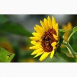 Компанія Дніпро-Білдінг. Насіння гібридів соняшника (Біотек, Евраліс, Лімагрейн)