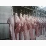 Реализуем свинину в полу-тушах, Опт розница