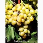 Виноград. Корнесобственные и привитые саженцы