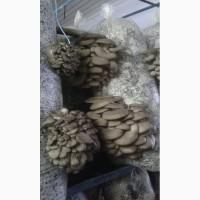 Продам грибы Вешенки