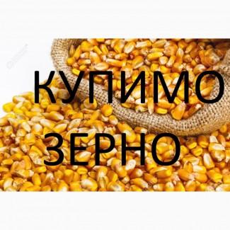 Компанія постійно і дорого закуповує кукурудзу (можливо вологу, не кондицію)