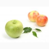 Продам яблука чемпіон флоріна