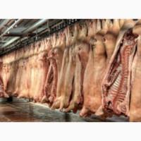 Продаю домашнее мясо свинины