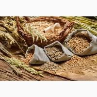 Закупаем дорого зерновые культуры