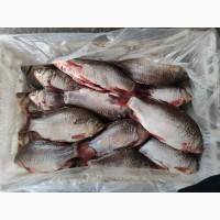 Продам речную рыбу карась очищенный и потрошенный