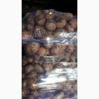 Продам раннюю картошку Азербайджан. Перебранная в сетки. Цена 11гр