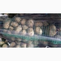 Продам раннюю картошку Азербайджан. Перебранная в сетки. Цена 9гр
