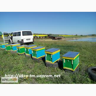 Пчелопакеты на весну 2017 года с доставкой